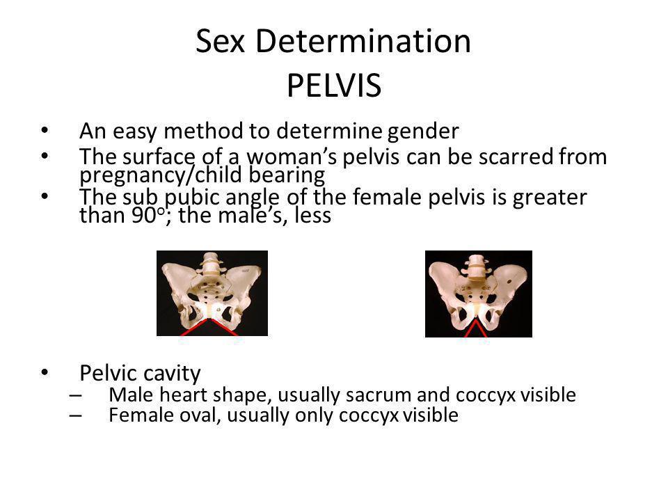 Sex Determination PELVIS