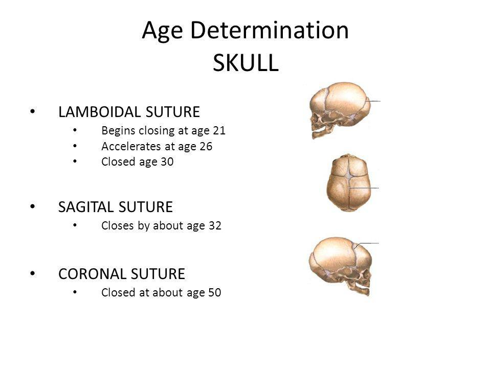 Forensic Anthropology What We Learn From Bones - ppt video online ...