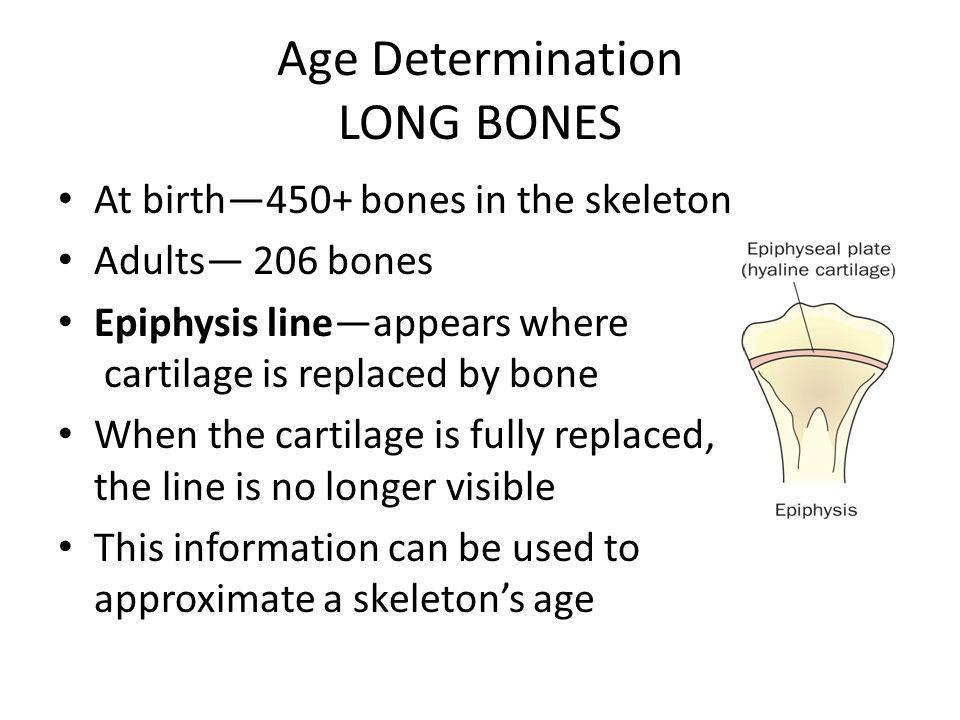 Age Determination LONG BONES