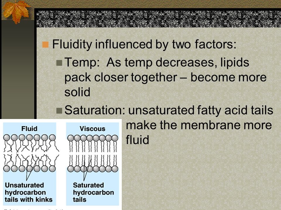 Fluidity influenced by two factors: