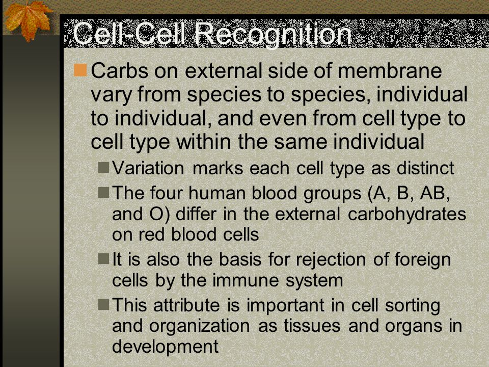 Cell-Cell Recognition