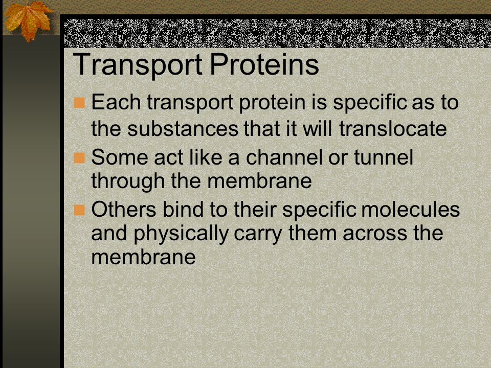 Transport Proteins Each transport protein is specific as to the substances that it will translocate.