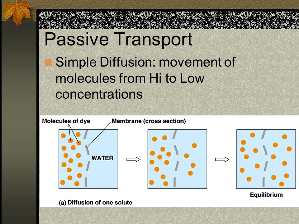 Passive Transport Simple Diffusion: movement of molecules from Hi to Low concentrations