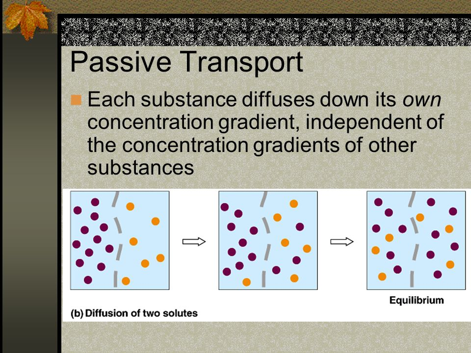 Passive Transport Each substance diffuses down its own concentration gradient, independent of the concentration gradients of other substances.