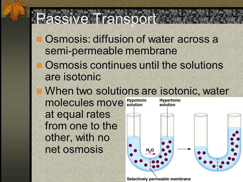 Passive Transport Osmosis: diffusion of water across a semi-permeable membrane. Osmosis continues until the solutions are isotonic.