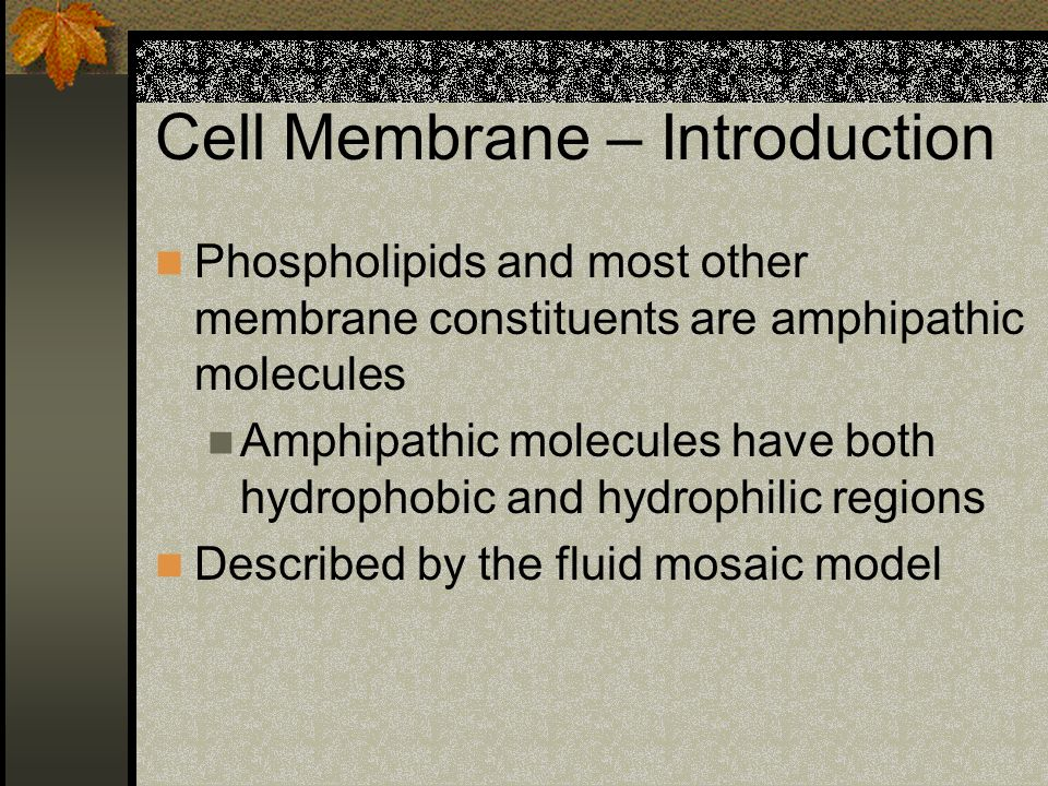 Cell Membrane – Introduction