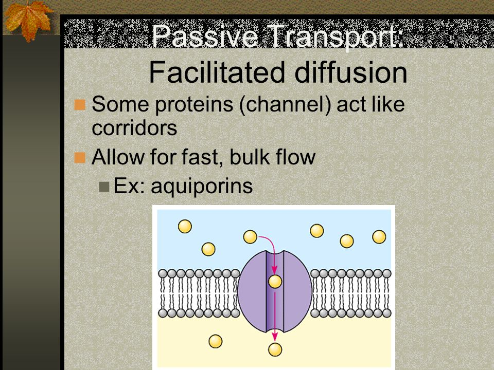 Passive Transport: Facilitated diffusion