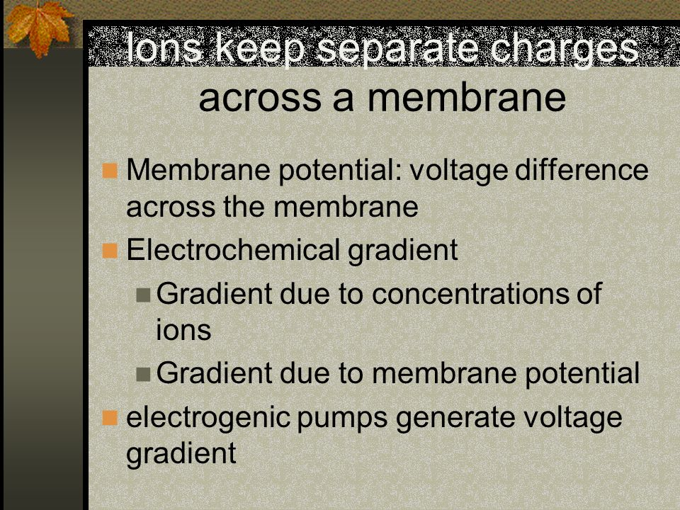 Ions keep separate charges across a membrane