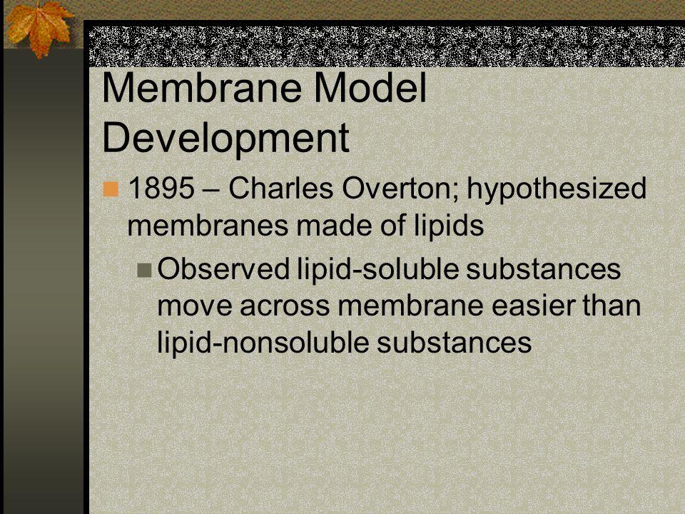 Membrane Model Development