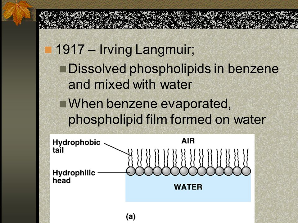 1917 – Irving Langmuir; Dissolved phospholipids in benzene and mixed with water.