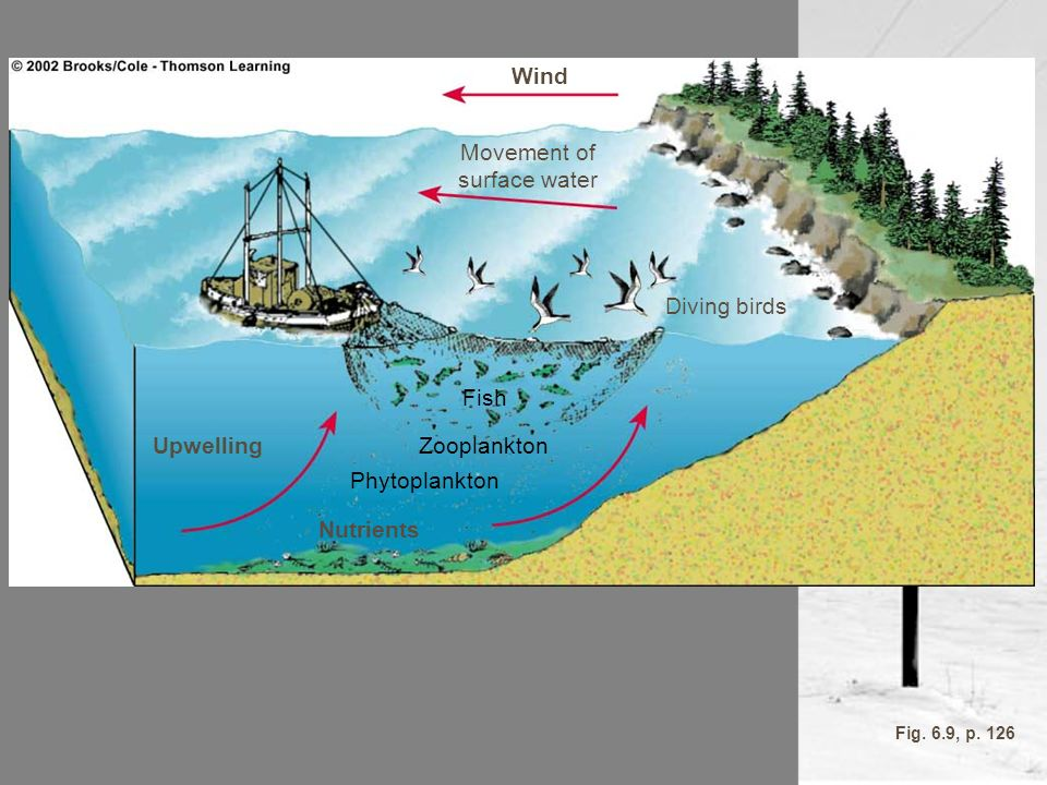 Wind Upwelling Nutrients