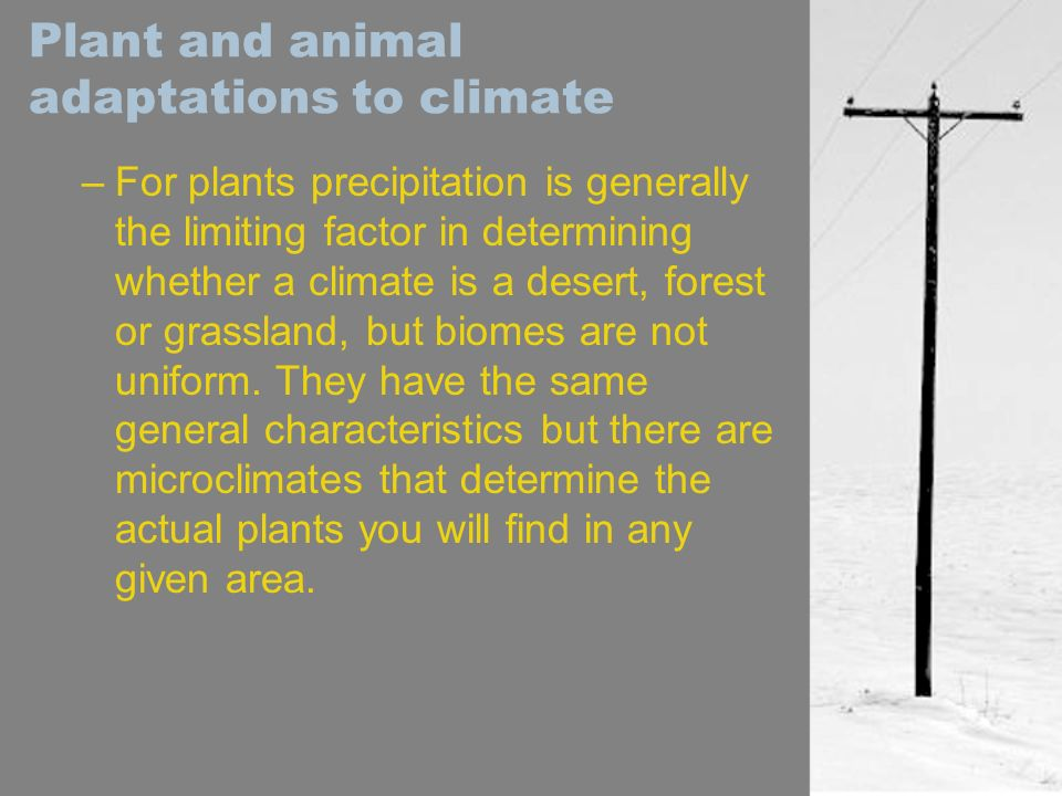 Plant and animal adaptations to climate