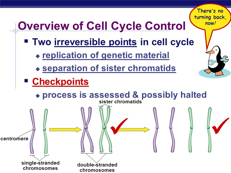 Overview of Cell Cycle Control