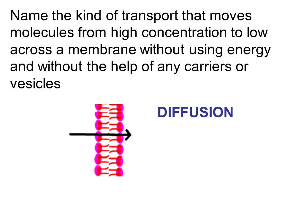 Name the kind of transport that moves molecules from high concentration to low across a membrane without using energy and without the help of any carriers or vesicles