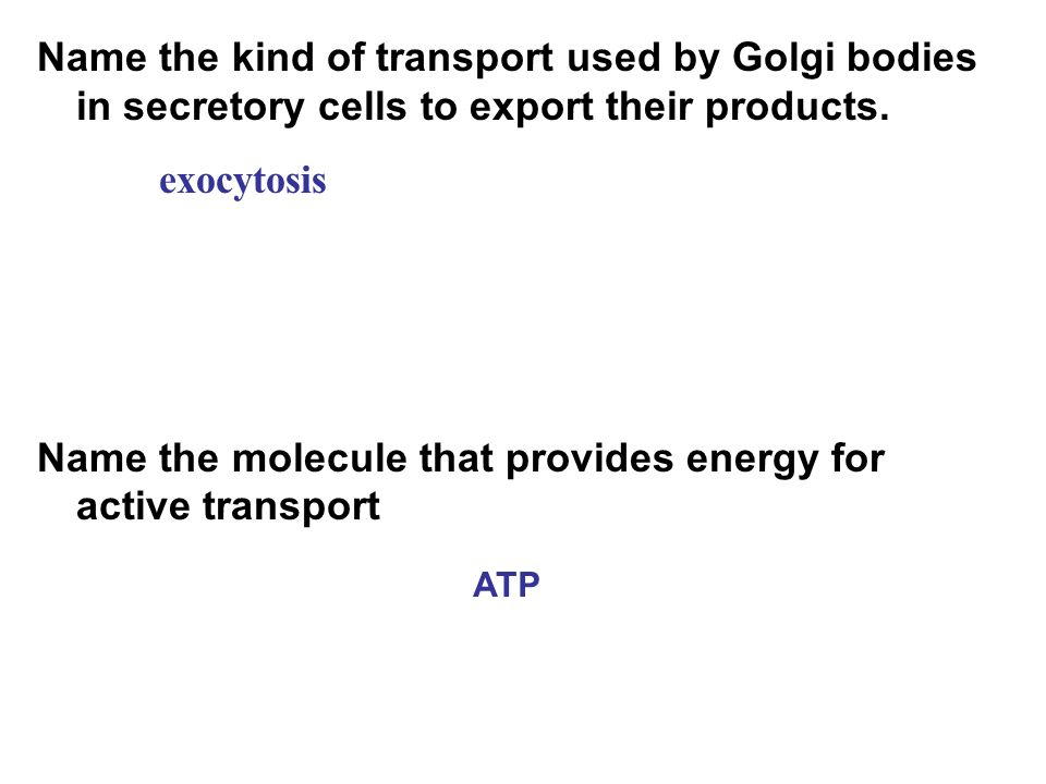 Name the molecule that provides energy for active transport exocytosis