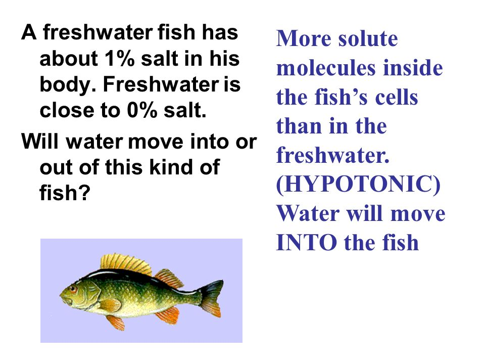 molecules inside the fish's cells than in the freshwater. (HYPOTONIC)