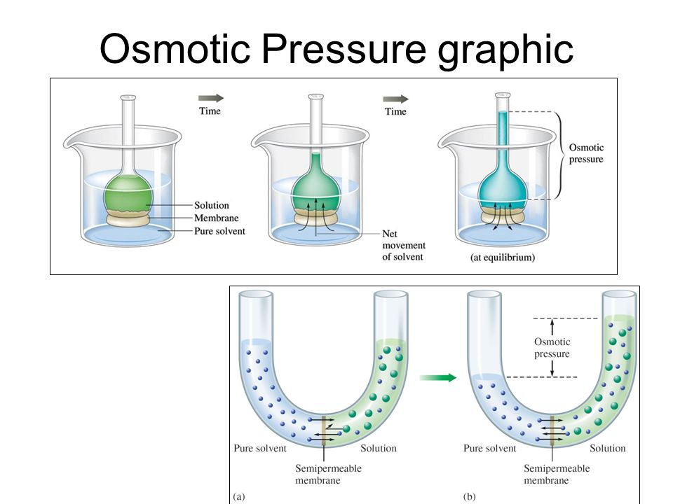 Osmotic Pressure graphic