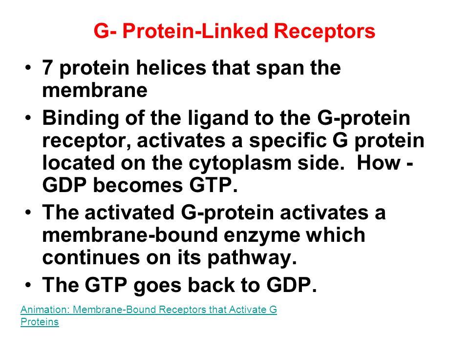 G- Protein-Linked Receptors