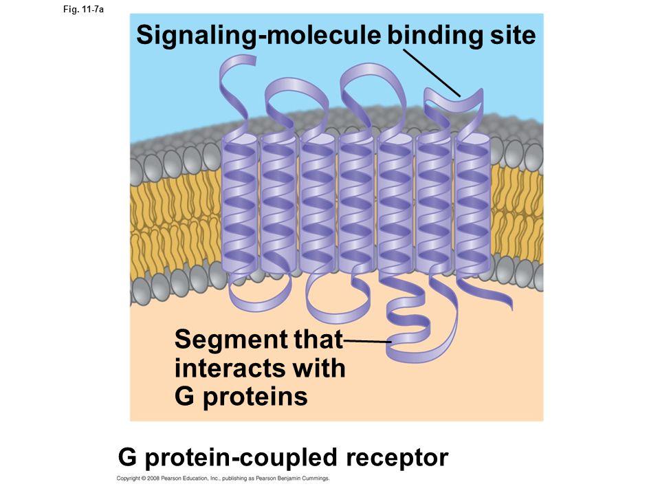 Signaling-molecule binding site