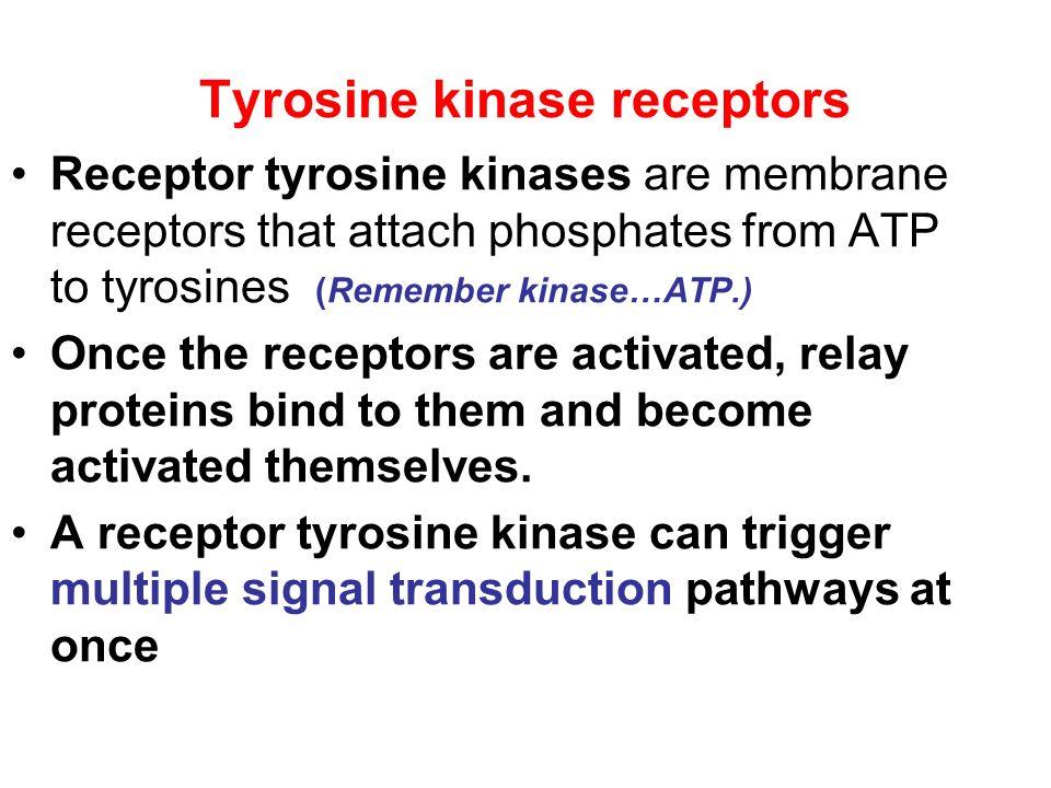 Tyrosine kinase receptors