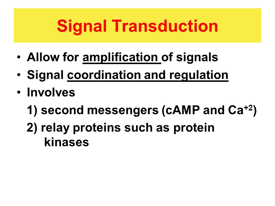 Signal Transduction Allow for amplification of signals