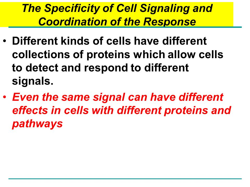 The Specificity of Cell Signaling and Coordination of the Response