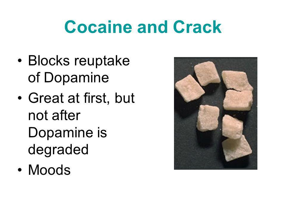 Cocaine and Crack Blocks reuptake of Dopamine