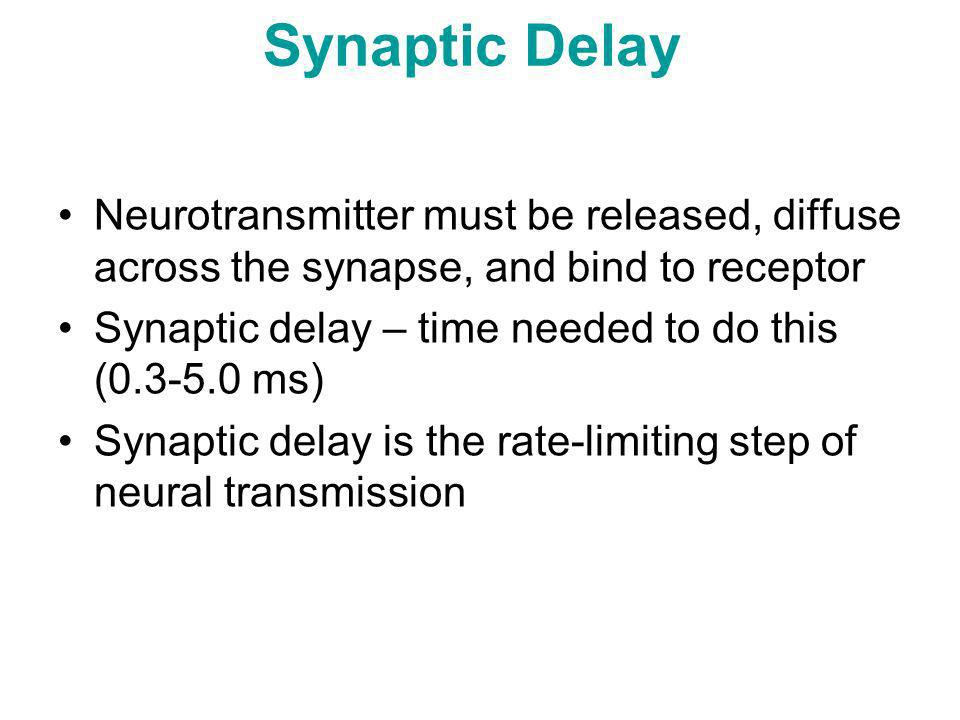 Synaptic Delay Neurotransmitter must be released, diffuse across the synapse, and bind to receptor.