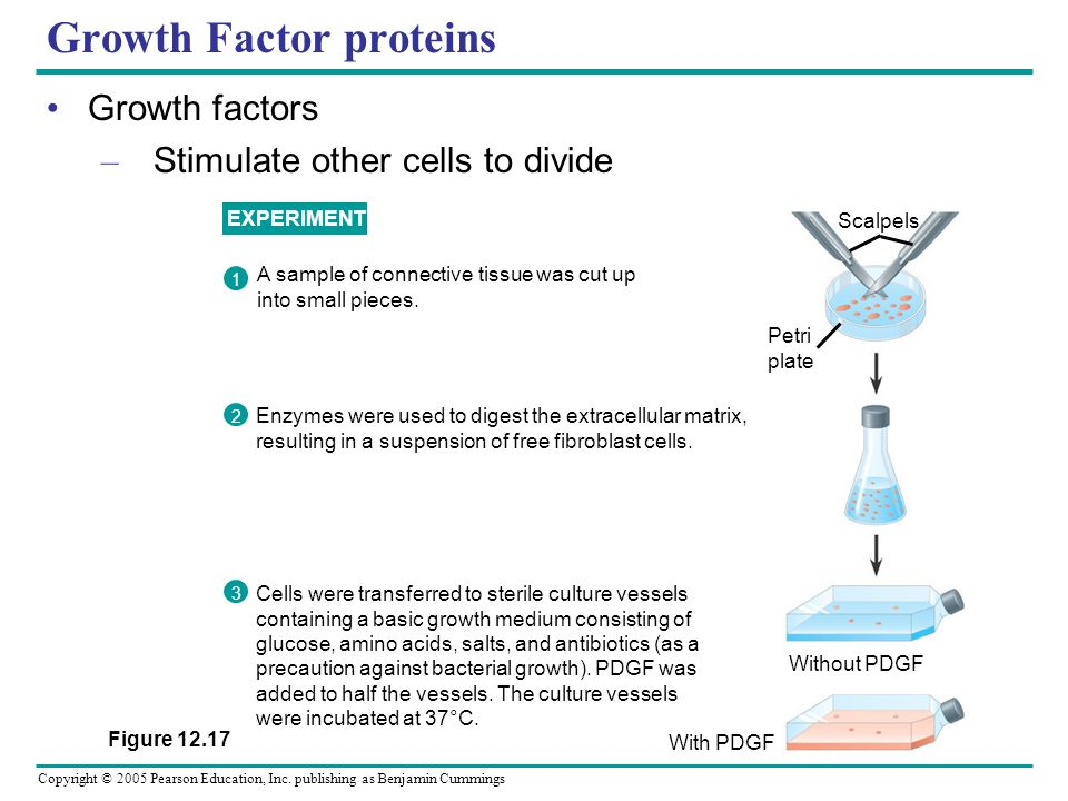 Growth Factor proteins