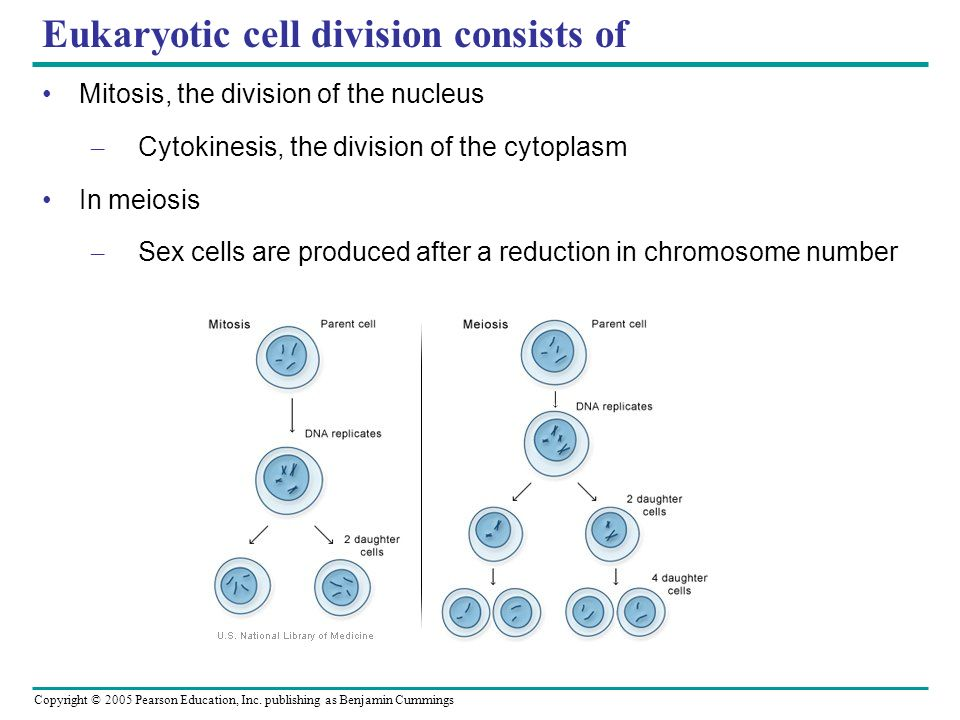 Eukaryotic cell division consists of