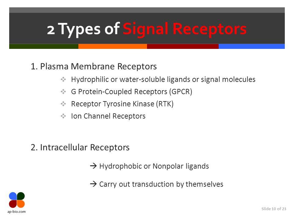 2 Types of Signal Receptors