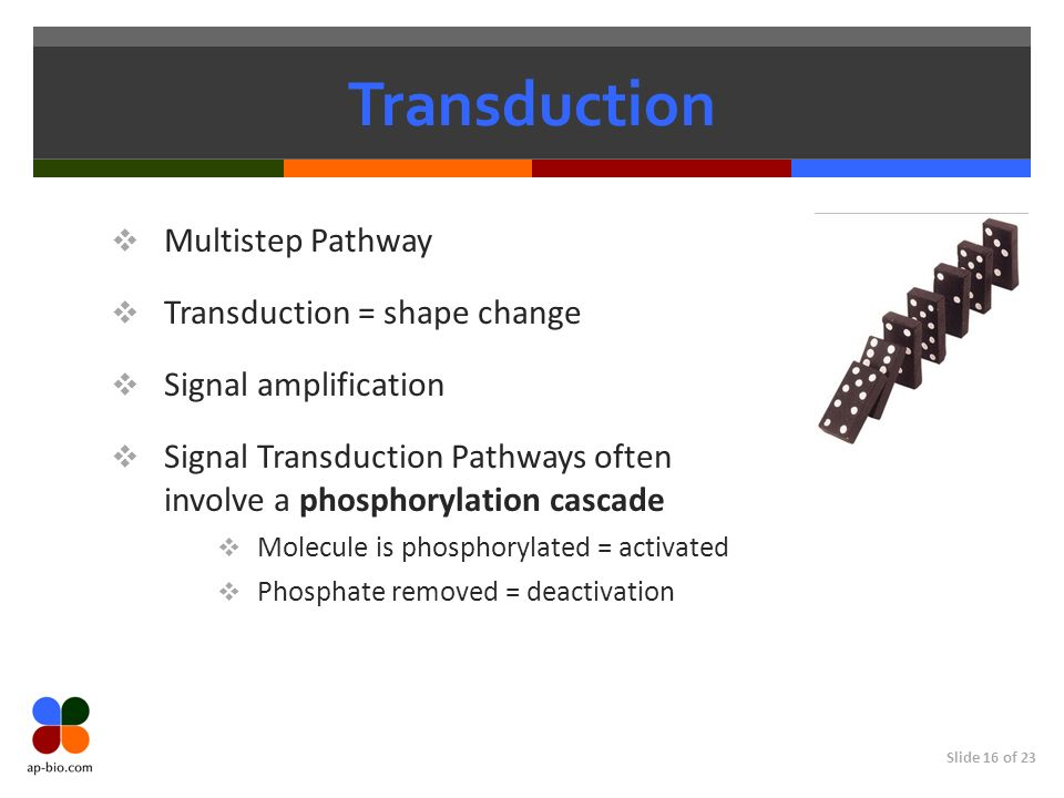 Transduction Multistep Pathway Transduction = shape change