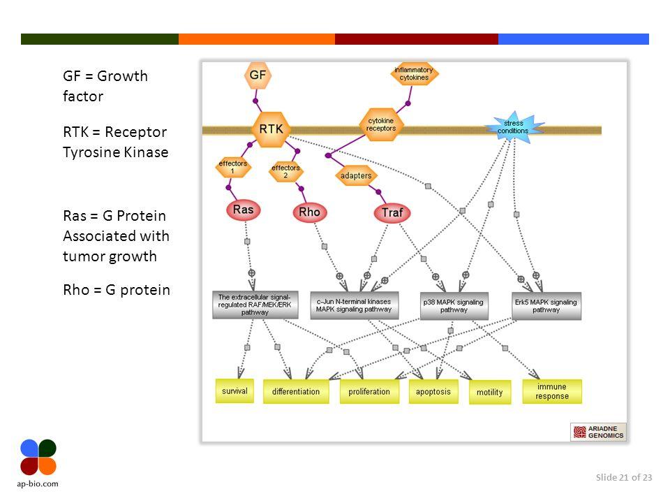 GF = Growth factor RTK = Receptor Tyrosine Kinase. Ras = G Protein. Associated with tumor growth.
