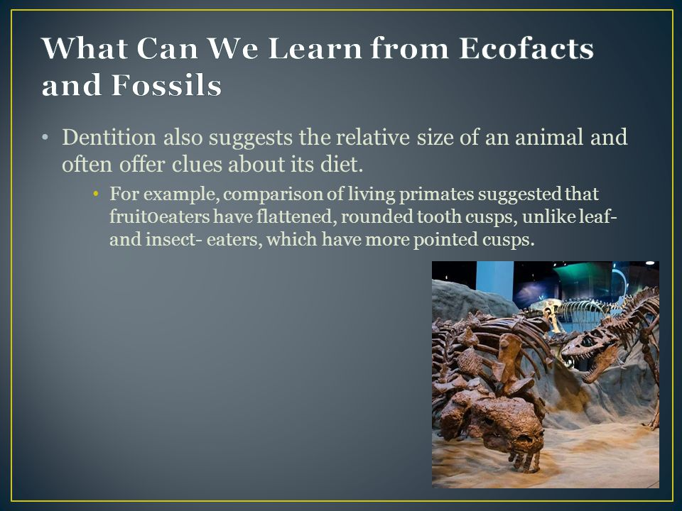 What Can We Learn from Ecofacts and Fossils