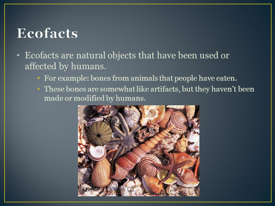 Ecofacts Ecofacts are natural objects that have been used or affected by humans. For example: bones from animals that people have eaten.
