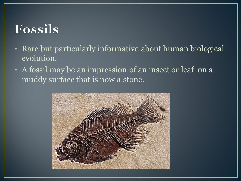 Fossils Rare but particularly informative about human biological evolution.