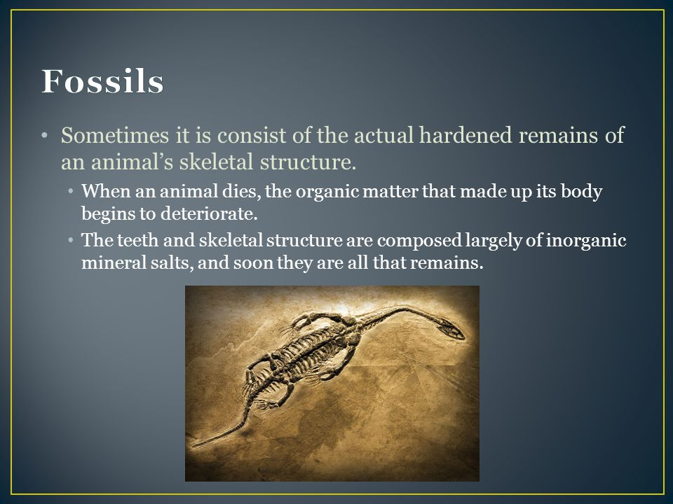 Fossils Sometimes it is consist of the actual hardened remains of an animal's skeletal structure.