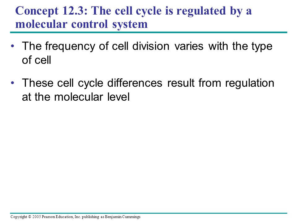 Concept 12.3: The cell cycle is regulated by a molecular control system
