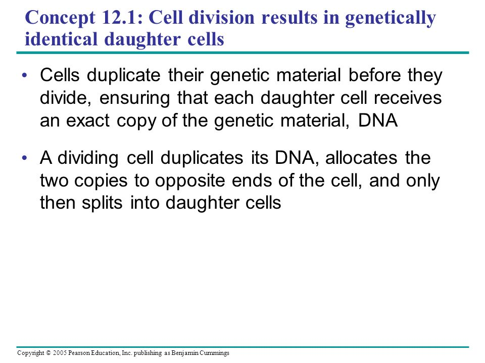 Concept 12.1: Cell division results in genetically identical daughter cells
