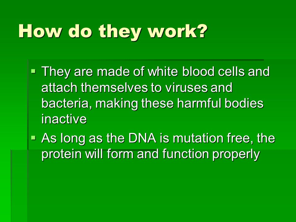 How do they work They are made of white blood cells and attach themselves to viruses and bacteria, making these harmful bodies inactive.