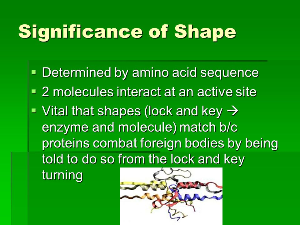 Significance of Shape Determined by amino acid sequence