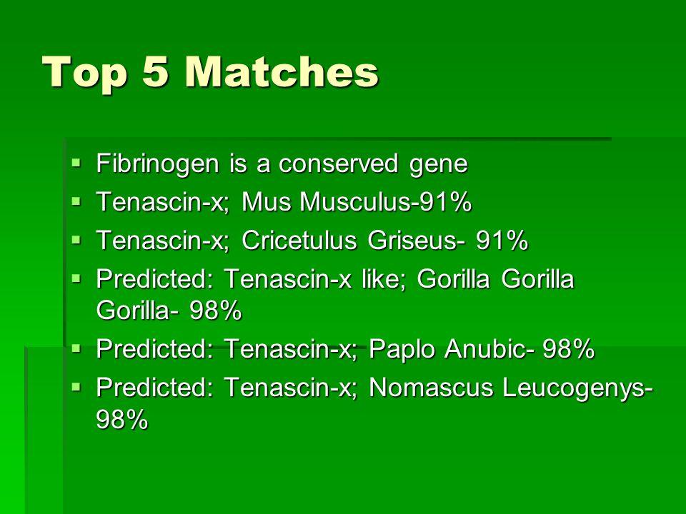 Top 5 Matches Fibrinogen is a conserved gene
