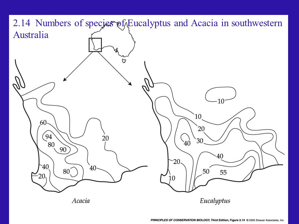 2.14 Numbers of species of Eucalyptus and Acacia in southwestern Australia