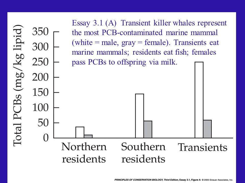 Essay 3.1 (A) Transient killer whales represent the most PCB-contaminated marine mammal (white = male, gray = female). Transients eat marine mammals; residents eat fish; females pass PCBs to offspring via milk.