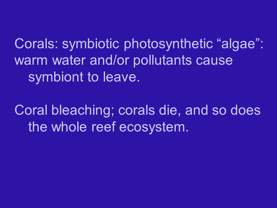 Corals: symbiotic photosynthetic algae :