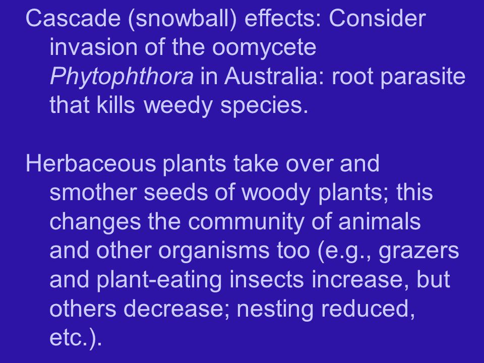 Cascade (snowball) effects: Consider invasion of the oomycete Phytophthora in Australia: root parasite that kills weedy species.