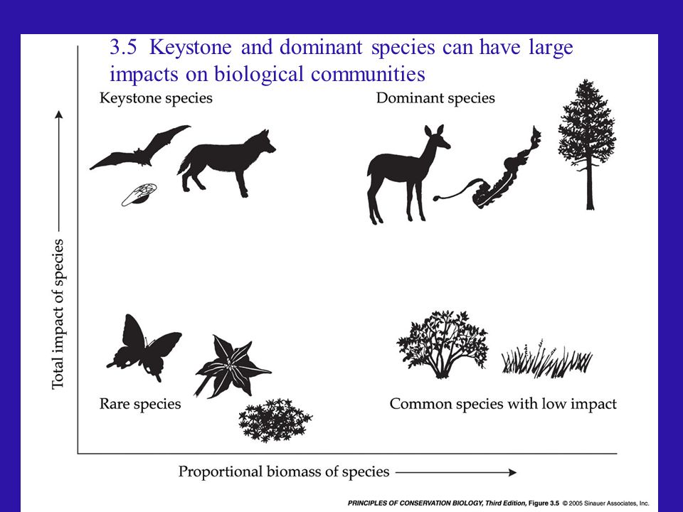 3.5 Keystone and dominant species can have large impacts on biological communities