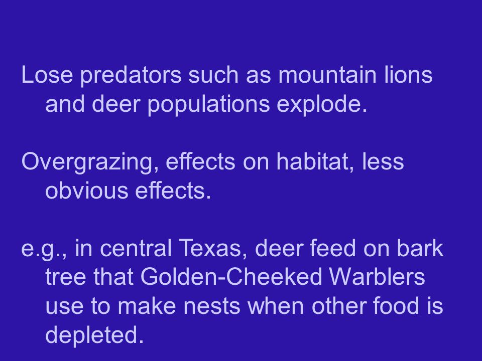 Lose predators such as mountain lions and deer populations explode.