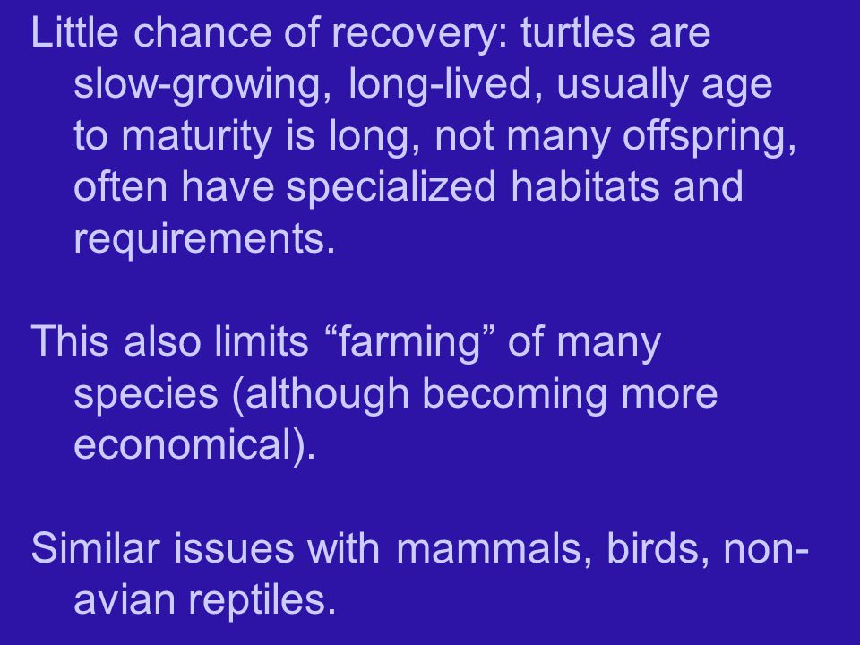 Little chance of recovery: turtles are slow-growing, long-lived, usually age to maturity is long, not many offspring, often have specialized habitats and requirements.