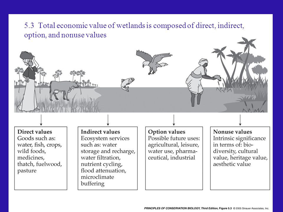 5.3 Total economic value of wetlands is composed of direct, indirect, option, and nonuse values